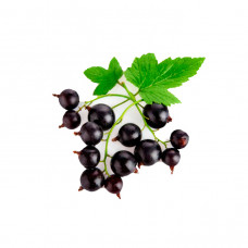 Black Currant (DF)